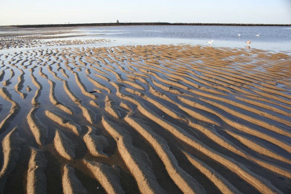 Rippled sands